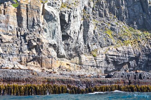 Seals at Cape Pillar