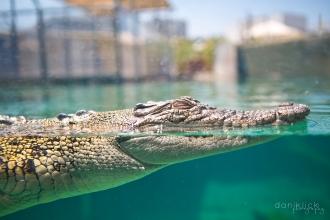 Crocosaurus Cove - Darwin