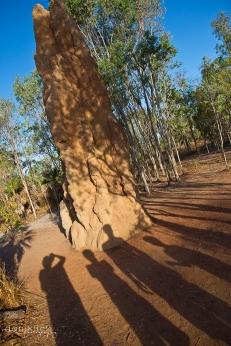 Massive termite mound in Litchfield